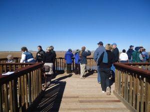 Noon approaches and more birdwatchers arrive. Sheri spontaneously fields questions and offers fascinating bits of information.  For instance, within the huge flocks, the sandhills travel in family pods of three or four birds. Sadly, if a youngster is orphaned, he or she will not be adopted by other adults.